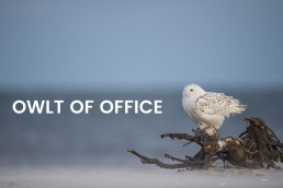out-of-officemails