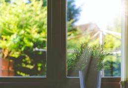 Wat Hebben We Deze Maand Geleerd? April 2020 Plant voor raam